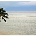 Maui Tropics  by Joan  Minchak