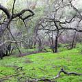 Meadow by Gilbert Artiaga