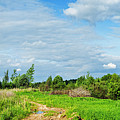 Meadow Road by Vadzim Kandratsenkau