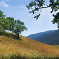 Meadow View Summer by Karen  W Meyer