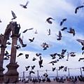 Mexican Pigeon Ruins by Benjamin Garvey