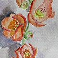 Mexican Poppies by Kathy Mitchell