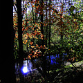 Michigan Fall Colors 1 by Scott Hovind