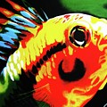 Mohawk Fish by Colleen  Auxier