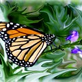 Monarch Butterfly 4 by Jim  Darnall