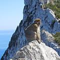 Monkey In Gibraltar by Heather Coen