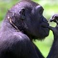 Monkey Thinking by April Holgate