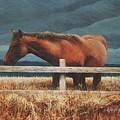 Montana Mare Study by Steve Greco