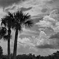 Moody Florida Sky by Deborah Benoit