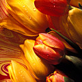 Moody Tulips by Garry Gay