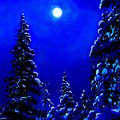 Moonshine On Snowy Pine by Greg Hammond