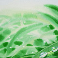 Morning Dew Drops by Irina Sztukowski