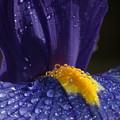 Morning Dew by Tim Riley