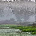 Morning Fog At Brazos Bend by James Woody