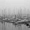 Morning Fog by Terence Davis