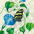 Morning Glories And Butterfly by Sally Balfany