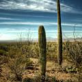Morning In The Sonoran Desert by Saija  Lehtonen