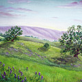 Morning Lupines by Laura Iverson