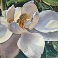 Morning Magnolia by Marion  Hylton