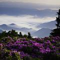 Morning On Grassy Ridge Bald by Rob Travis
