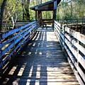 Morris Bridge Boardwalk by Carol Groenen
