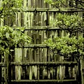 Mossy Bamboo Fence - Digital Art by Carol Groenen