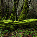Mossy Fence 3 by Bob Christopher