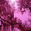 Mossy Splendor by Florene Welebny