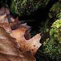 Mossy Wood 005 by Ryan Vaal