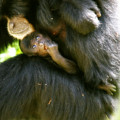 Mother And Baby Monkey by Lesley Smitheringale