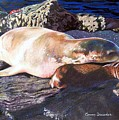 Mother And Child Sea Lion by Constance Drescher
