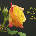 Mothers Day Card 4 by Michael Peychich