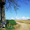 Mountain Bike Under A Tree Beside Dirt Road by Sami Sarkis