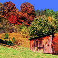 Mountain Home Place Back Yard  by Garland Johnson