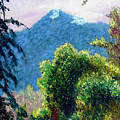 Mountain Rain Forrest by Stan Hamilton