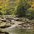Mountain Stream by Michael Peychich