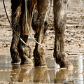 Muddy Reflections.. by Carol Miller