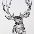 Mule Deer Buck by Lana Tyler