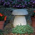Mushroom Stool by Douglas Barnett