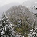 Mussoorie Winter 1 by Padamvir Singh