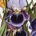 My Iris Garden by Mary Gaines