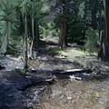 Mysterious Woods by Jennifer Skalecke