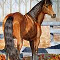Mystic In Her Paddock by Cheryl Dodd