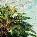 Mystical Palm by Paul Tokarski