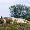 Nappy Time by Svetlana Sewell