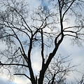 Nature - Tree In Toronto by Munir Alawi