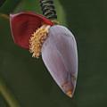 Nature Ear by Shelley Jones