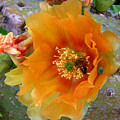 Nature In The Wild - Cactus Honey by Lucyna A M Green