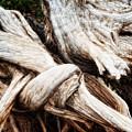 Nature's Twist - Bryce Canyon by Bob Coates
