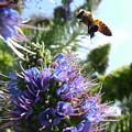 Nectar Landing by John Loyd Rushing